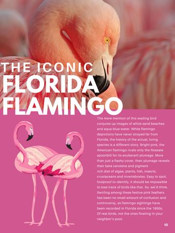 The Iconic Florida Flamingo
