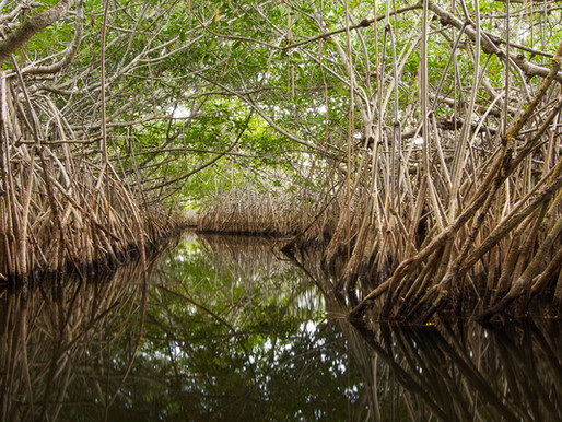 Statement from CEO of The Everglades Foundation on the National Academy of Sciences Report on Evergl