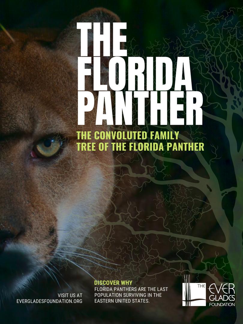 Florida Panther.png