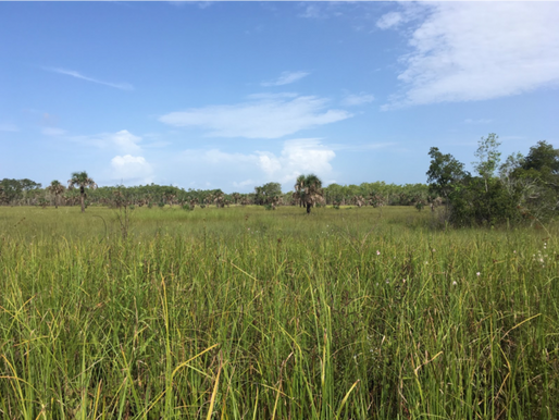 John Marshall Everglades Intern Week 6 Blog 2: Orchid Poaching, intern style
