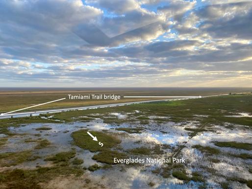 Tamiami Trail Bridges Already Showing That Everglades Restoration Works