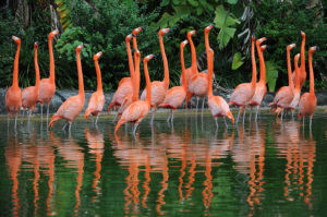 THE FLORIDIAN FLAMINGO