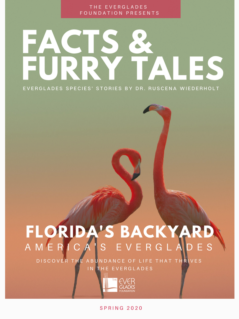 Facts and Fury Tales