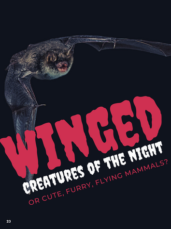 Winged Creatures Of The Night