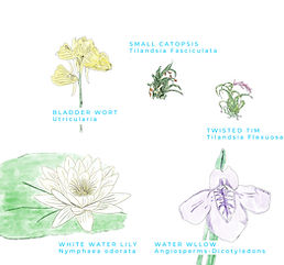 plant card.jpg