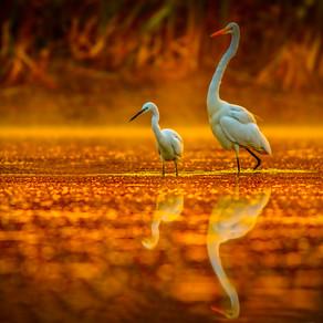 Bird's - Eye View Of The Everglades