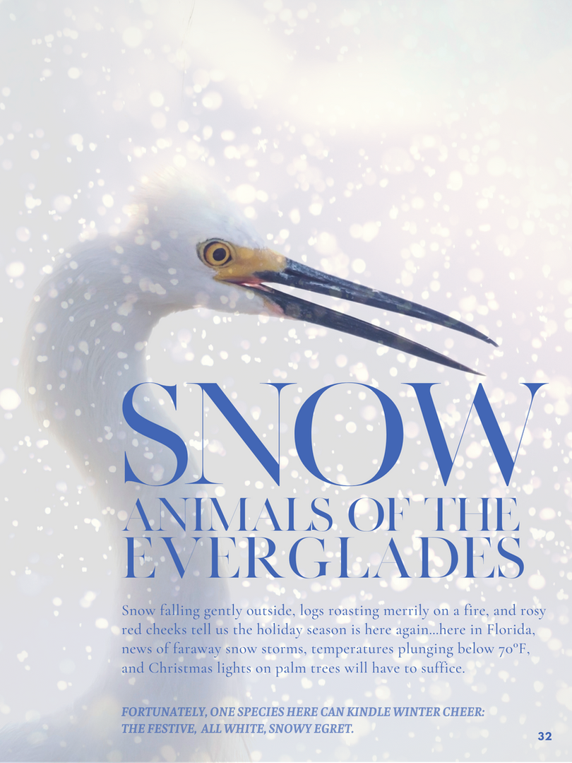 Snow Animals Of The Everglades