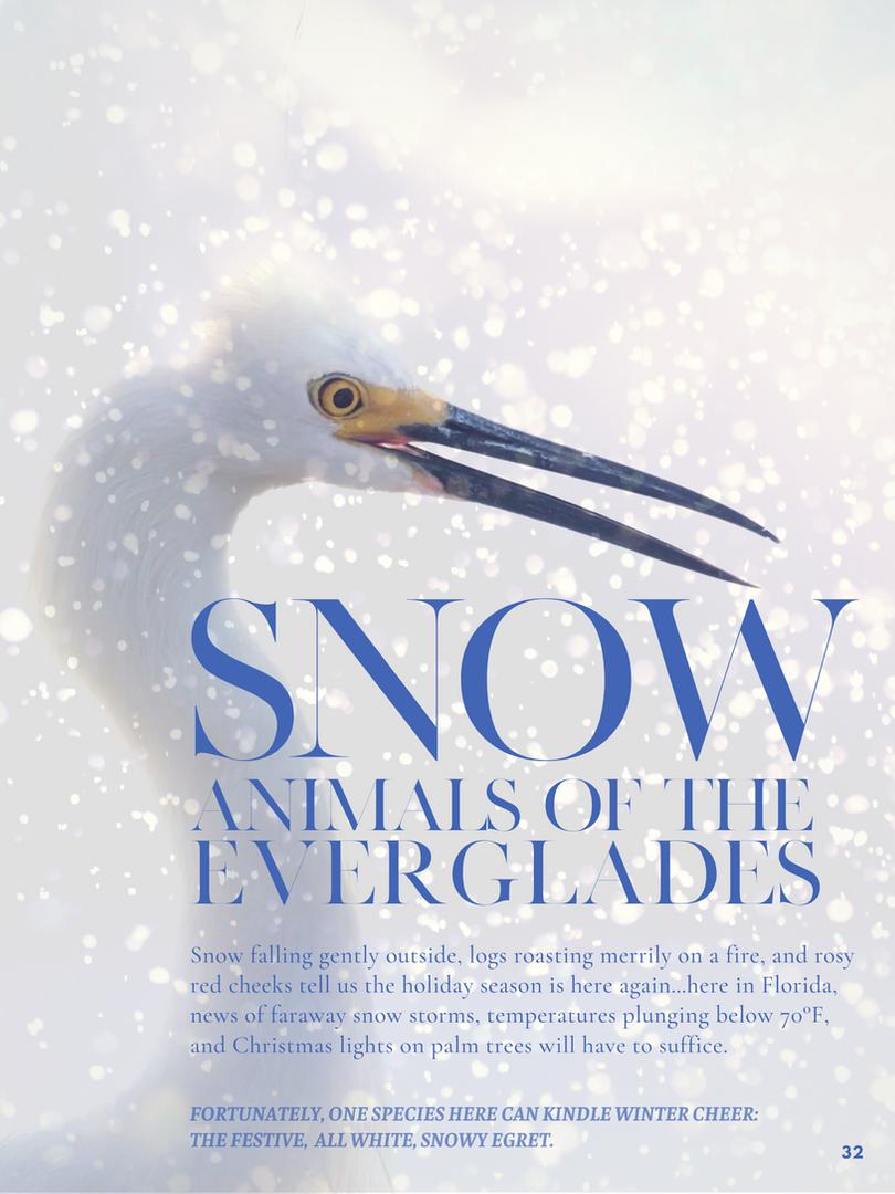 Snow Animals Of The Everglades