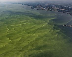 Wall Street Journal | Researchers Race to Thwart Algae Outbreaks