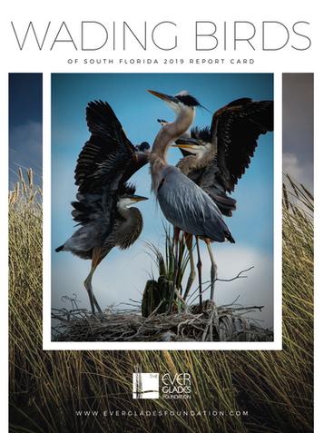 Wading Birds Reort 2020.png