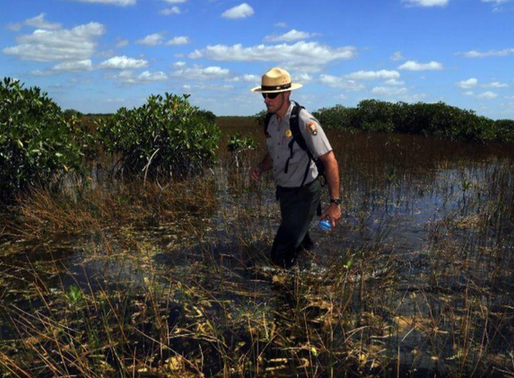 Sea level rise threatens to eat away the Everglades