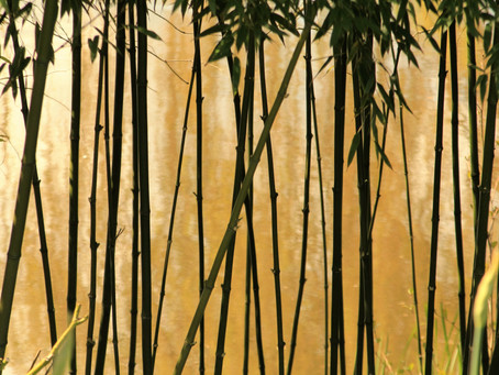 Bamboo, Rattan, Cane, or Wicker: Are you confused too?
