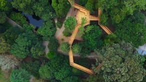 Treetop Walk – Serralves