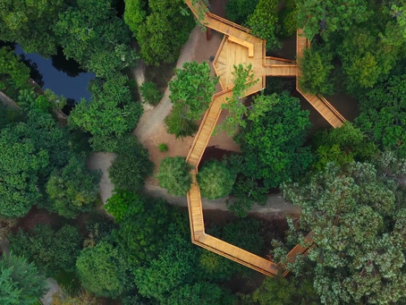 Treetop Walk – Serralves