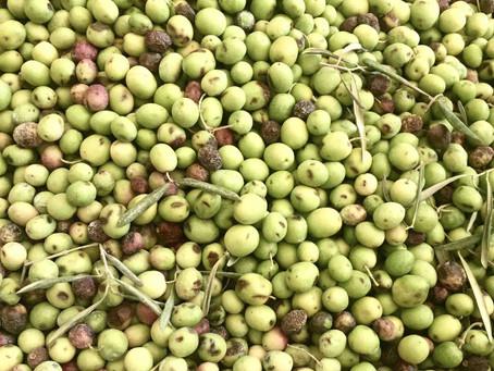 Monterosa – Extra Virgin Olive Oil