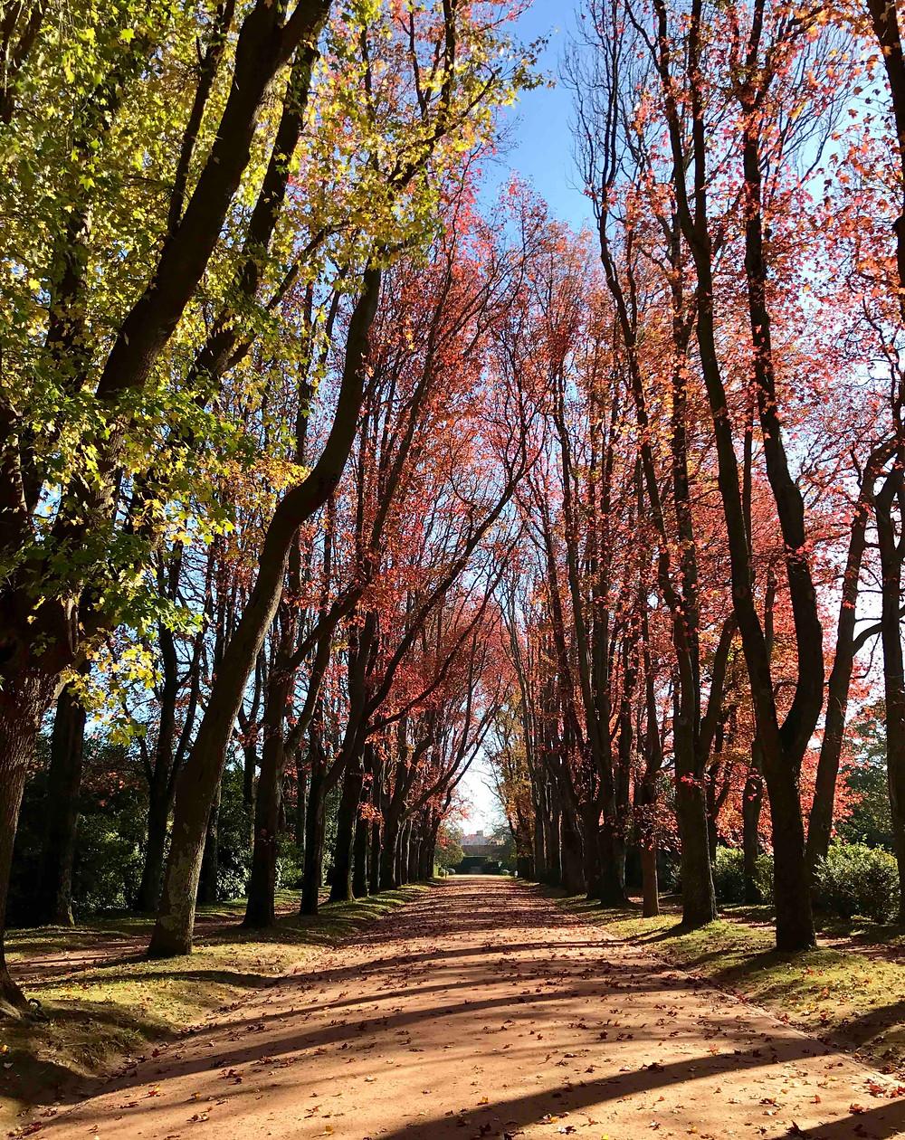 Park Serralves