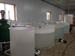 Water in the Fingerling Tanks