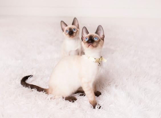 Egoza and Esenia - Upcoming Breeders!