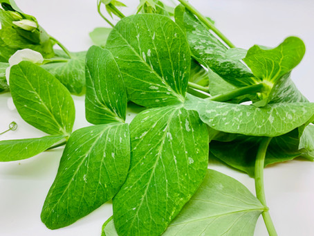 Seasonal Pea Shoots Recipe