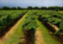 eden_hill_winery_vineyard_2.jpg