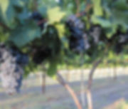 winery_eden_hill_thumb_1.jpg