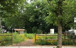 native garden.jpg