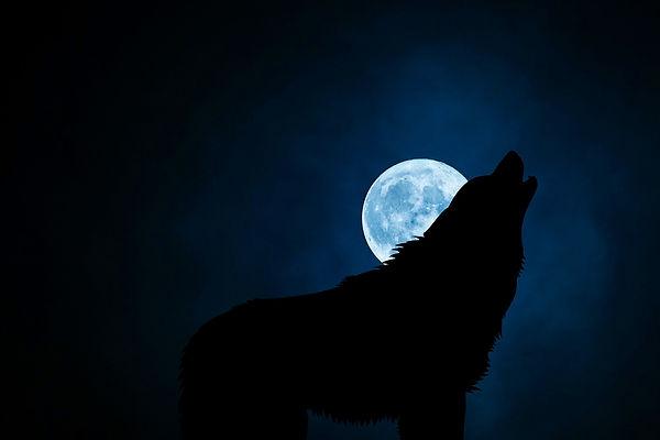wolf-3022813_1920.jpg