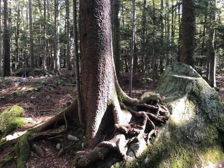 TREES (sul Lago dei Quattro Cantoni)