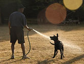 nuri and his dog.jpg