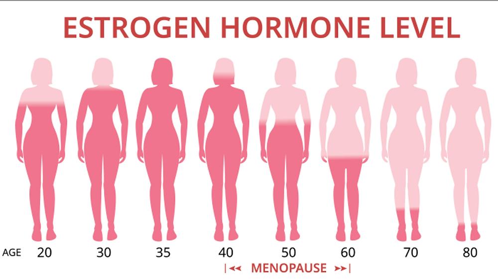 Estrogen levels during menopause
