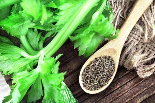 Celery Seeds High Blood Pressure Treatment - Breath And Beats