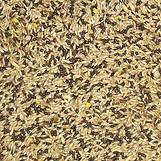 Canary - breeding mix