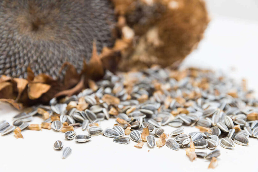 harvested-sunflower-seeds.jpg