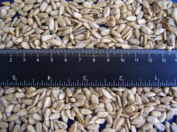Sunflower kernels.jpeg