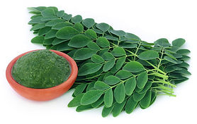 moringa-leaves-500x500.jpg
