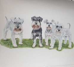 Schnauzer gang nearly there!