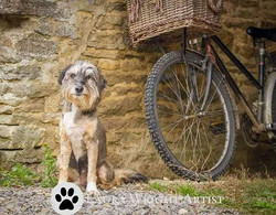 Just heard that my photo of Toby has been shortlisted for the VN Times Calendar Competition!  I got
