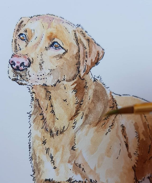A little watercolour this afternoon #dog