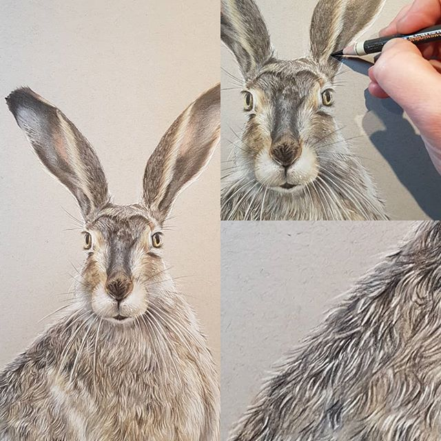 First drawing of 2018 Meet Harold the Hare..
