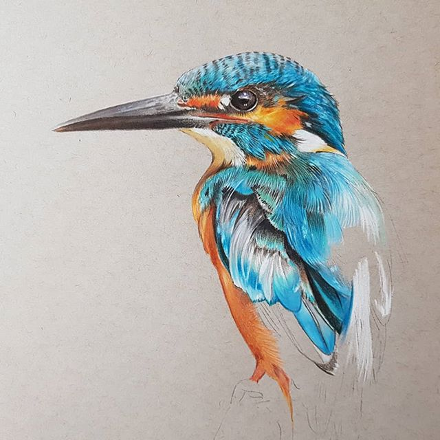 Work in progress #kingfisher #colouredpencilartist #colouredpencil #fabercastellpolychromos #caranda