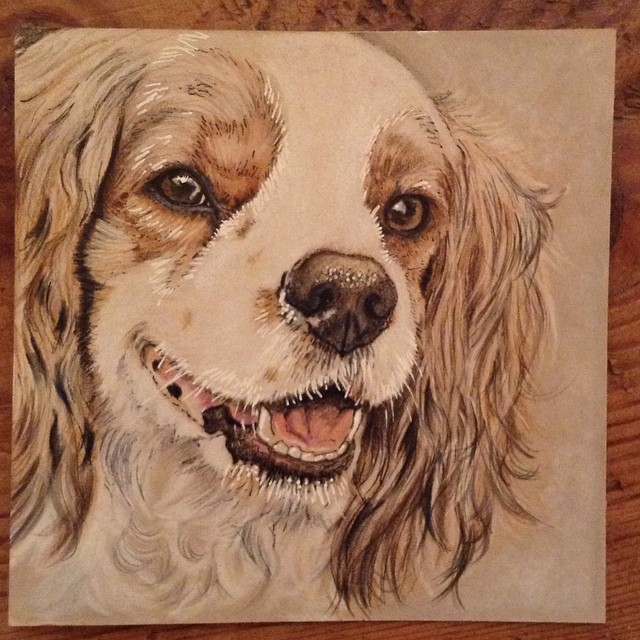 Instagram dog art! #cavalier#spaniel #spanielsofinstagram #dogart #colouredpencil #lovedogs