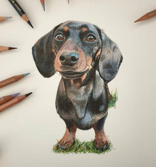 Richie Roo! #dachshundsofinstagram #dach