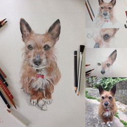 pretty much there with sprout after a lovely quiet afternoon in the studio #drawing #colouredpencila