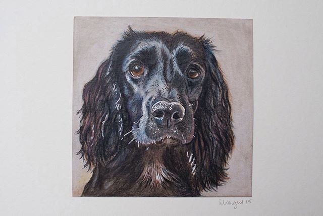 Tbt....but a very important one, this is Pippa one of the most beautiful spaniel souls there ever wa