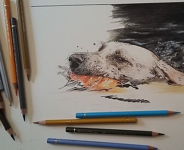Work in progress #colouredpencil #fabrianoartistico #fabercastell #coloredpencil #canineart #kaythom