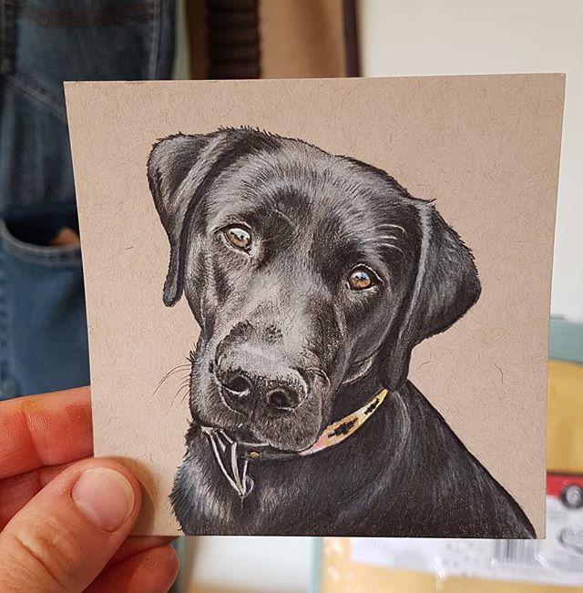 Labrador mini portrait..
