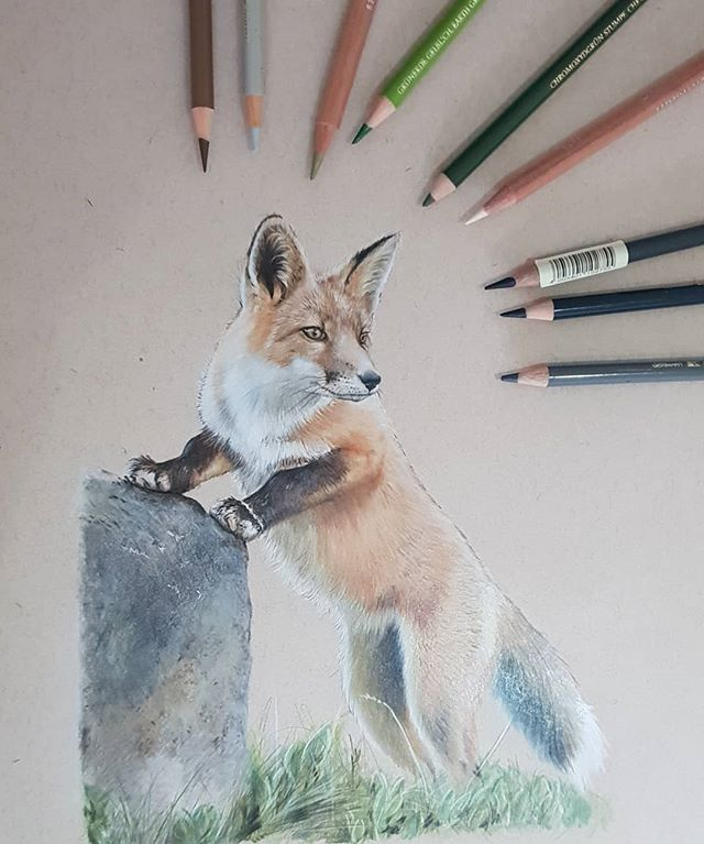 I think Mr Fox is finished #colouredpenc