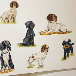 New spaniel collection