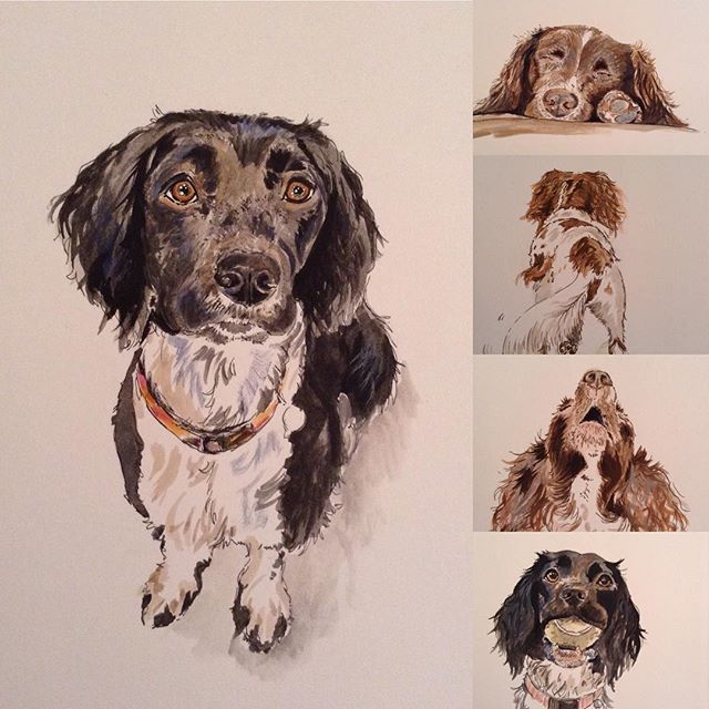 Spaniel sketches for a fabric competition #laurawrightartist #dogs #canineartist #spanielart #blacka
