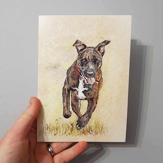 New cards #staffie #colouredpencil  #dog